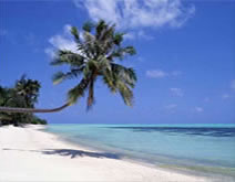 Would You Like to Have a Private Tropical Paradise